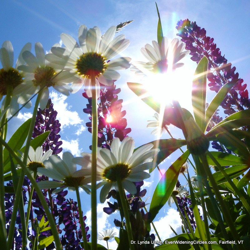 Image: square sunlight through flowers