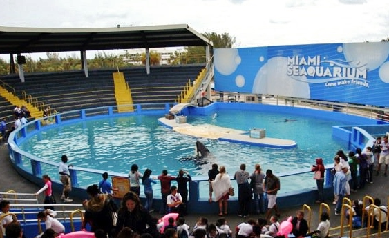 Image: A killer whale show at Miama Seaquarium