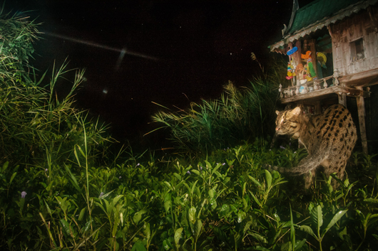 Image: Cat in backyard