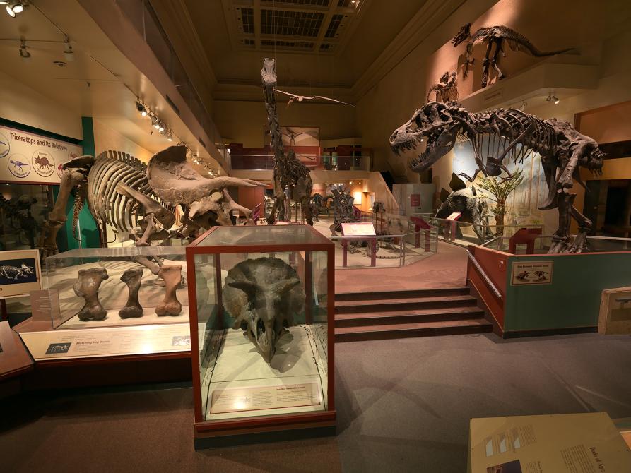 Image: Dinosaur fossils