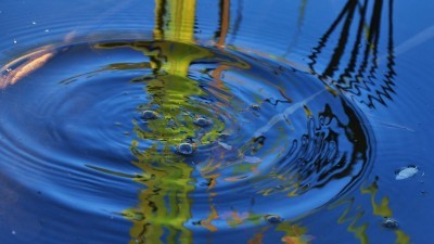Image: Ripples in pond water