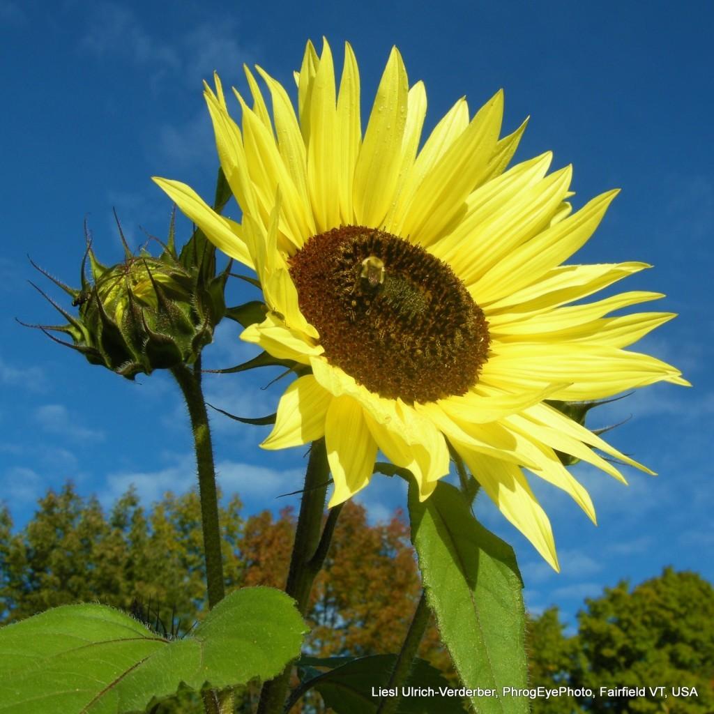 Liesl's flower pics phrogeyephoto (10)