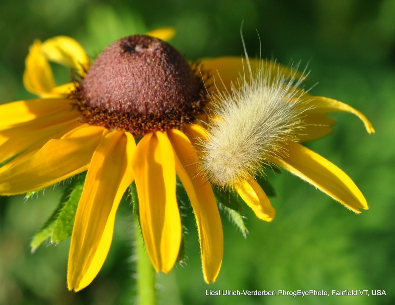 Liesl's flower pics phrogeyephoto (6)