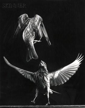 Image: Bird Taking Off