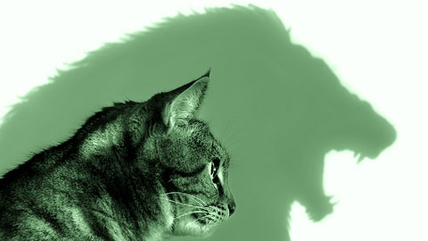 "Image: Cat Lion mindset, when you look in the mirror, are you a""glass half full"" person?"