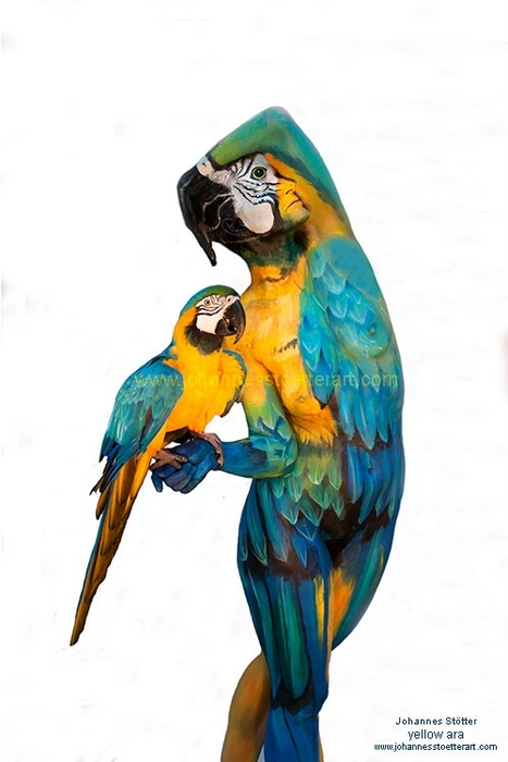 Image Stotter's Parrot