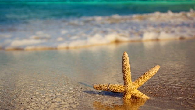 Image: Starfish on a Beach