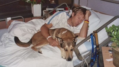 Image: The dog Denali rests on his owner, Ben's lap as he stays in the hospital