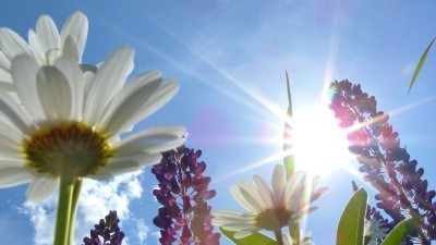 Image: Sun Through Flowers