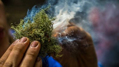 Image: a close up of someone coaxing smoke from moss trying to start a fire