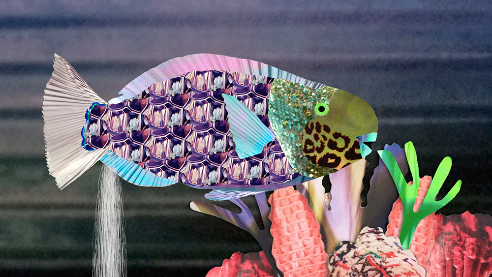 Image: Gross science collage parrot fish, beaches are made of fish poop