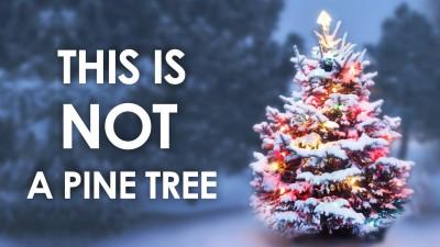 Christmas-tree-fun-facts