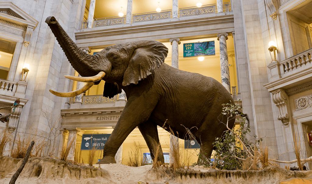 Smithsonain Elephant