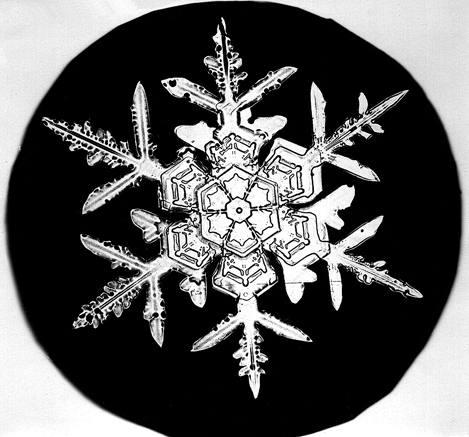 Image: Snowflake Bentley Snowflake 1