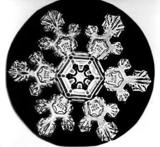 Image: Snowflake Bentley Snowflake 3