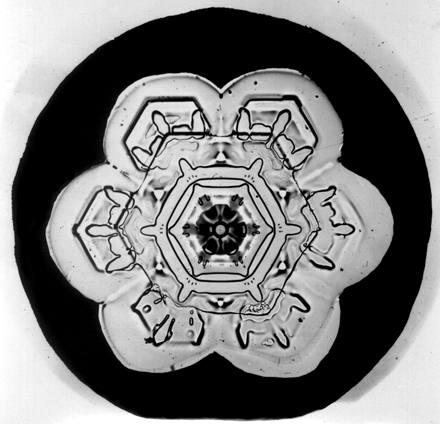 Image: Snowflake Bentley Snowflake 6