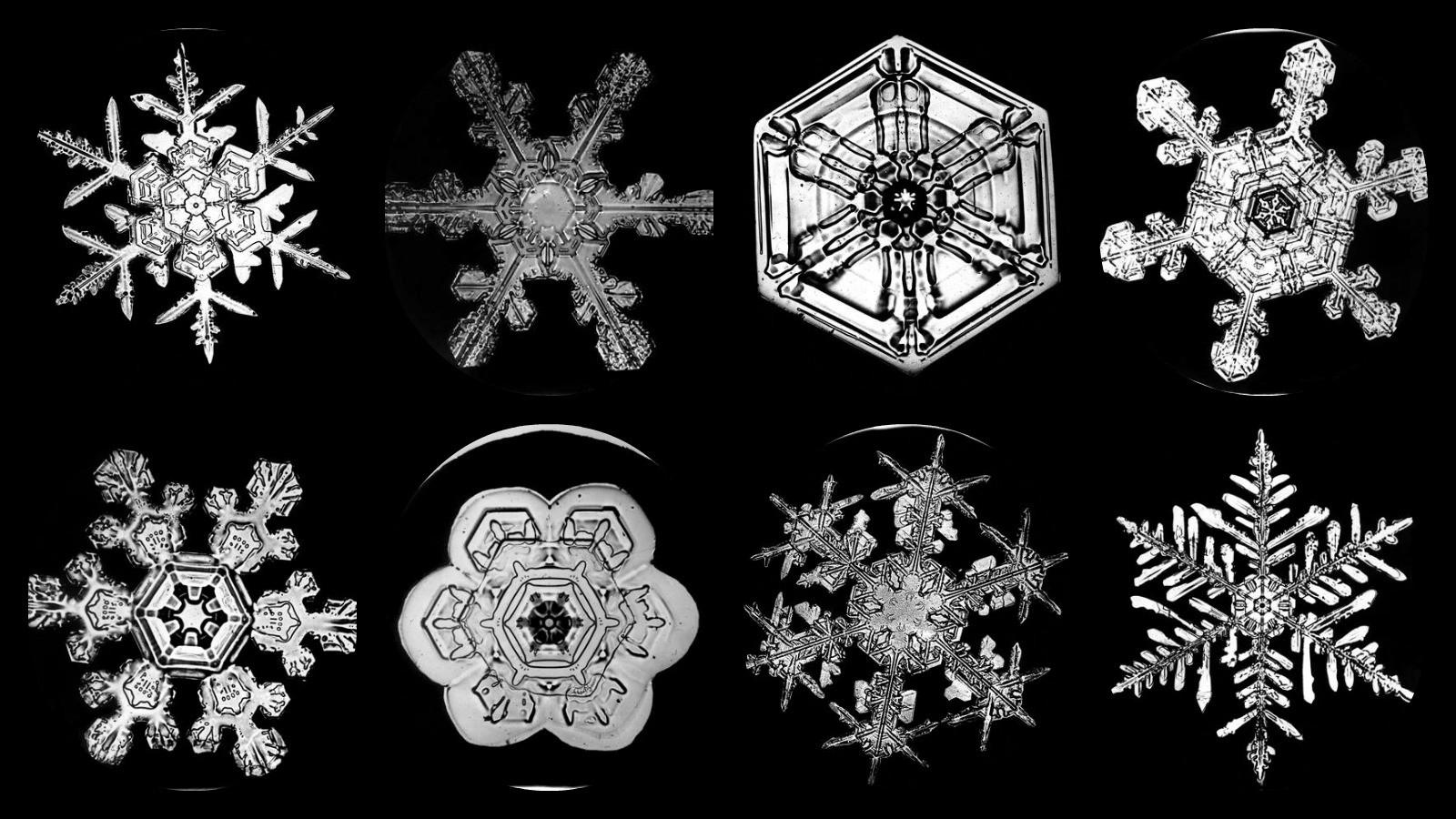 Snowflake Bentley Amp His Unique Snowflakes Ever Widening