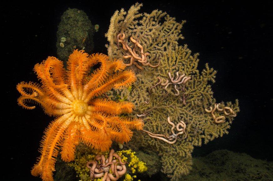 Underwater Exploation Mexico Corals