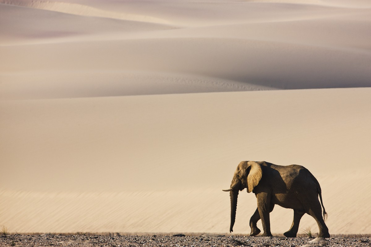 Image: Theo Allofs' lone elephant on the dune Namibia
