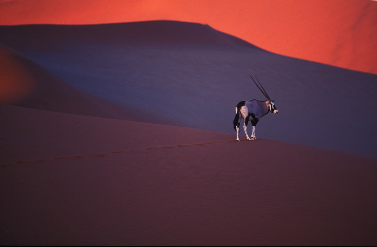 Image: Theo Allofs' Gemsbok on dune