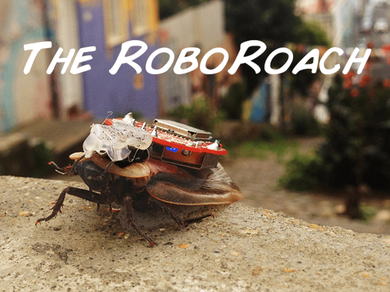 Image: Neuroscience made fun with robo roach