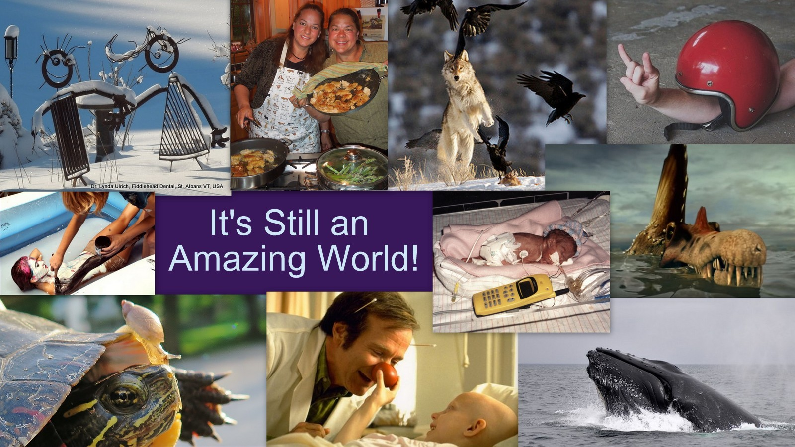 Image: Collage proving It is an amazing world.