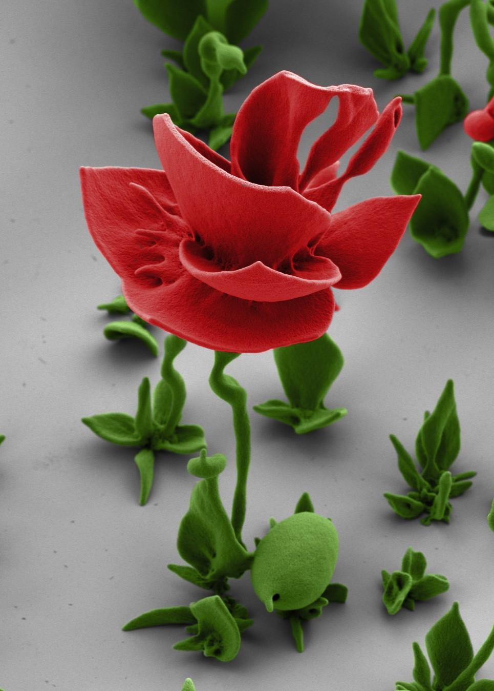 a microscopic crystal flower