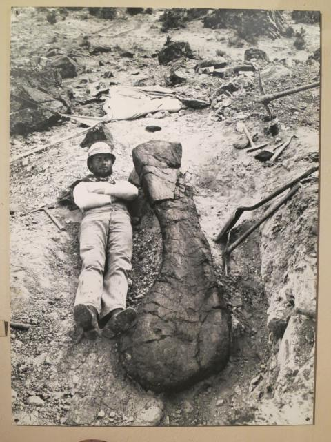 Elmer Riggs field assistant with the first brachiosaurus holotype humerus