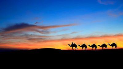 sunset-sunrise-camel-tour-morocco