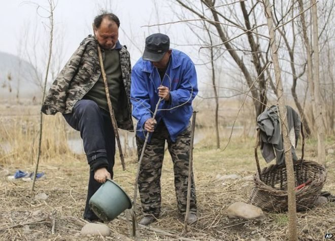 Image: Jia Haixia and Jia Wenqi planting a tree together
