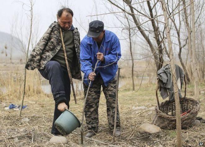 Image: Jia Haixia and Jia Wenqi planting a tree together
