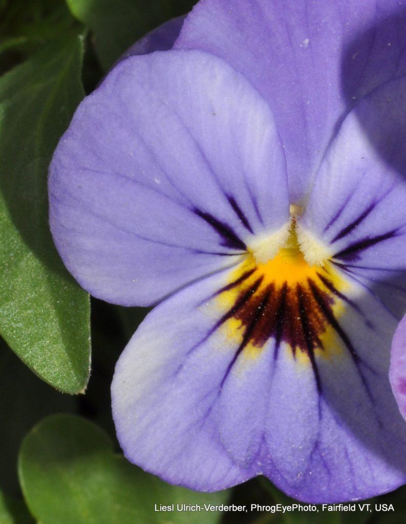 Image: a violet