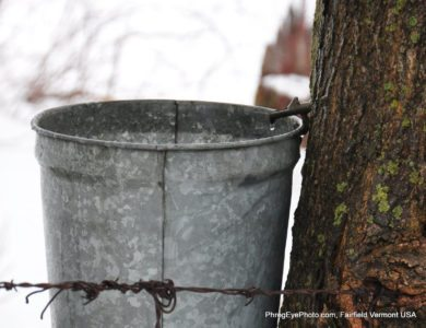 Image: Maple Syrup sap bucket