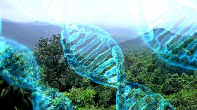 DNA rainforest