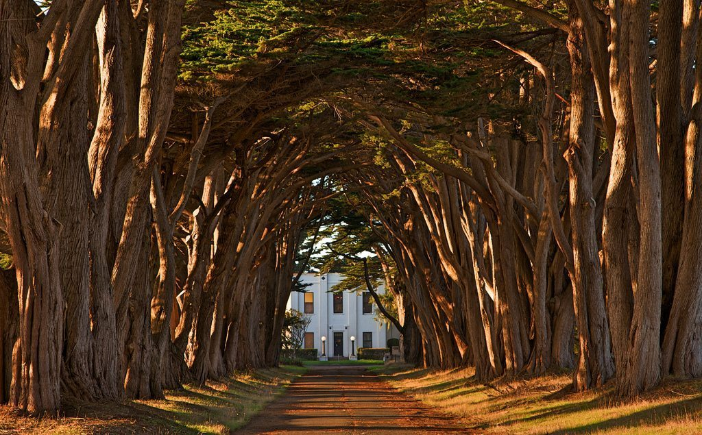Image: an avenue flanked densely with giant cypress trees formed together like a tunnel in the late afternoon light