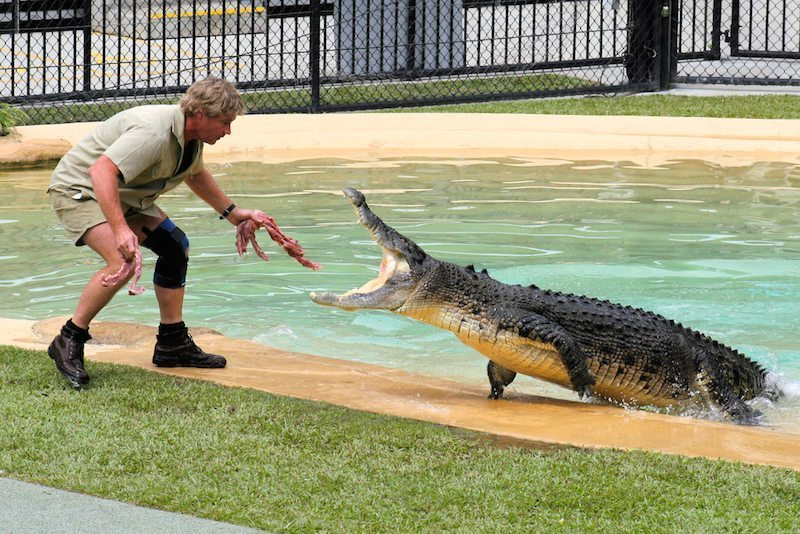 Image: Steve Irwin, the Crocodile Hunter, feeding a crocodile lunging at him