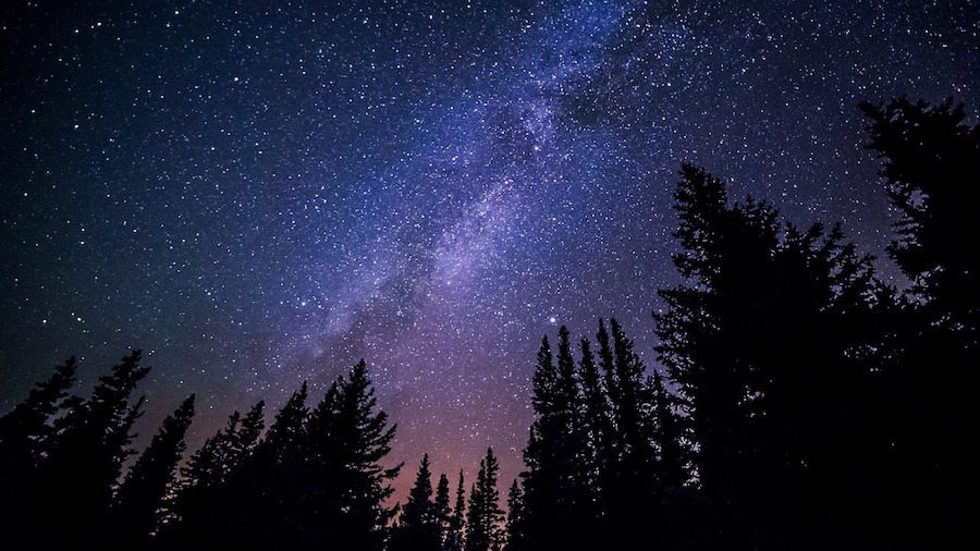 Image: The milky way and night sky looking up through a forest