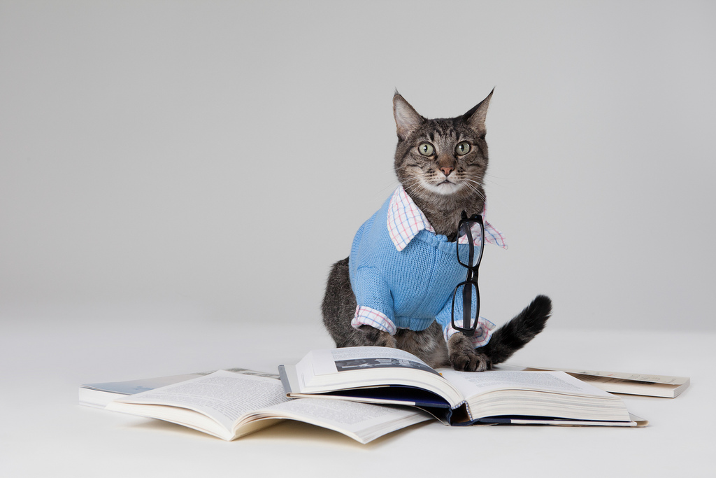 Image: A cat reading books
