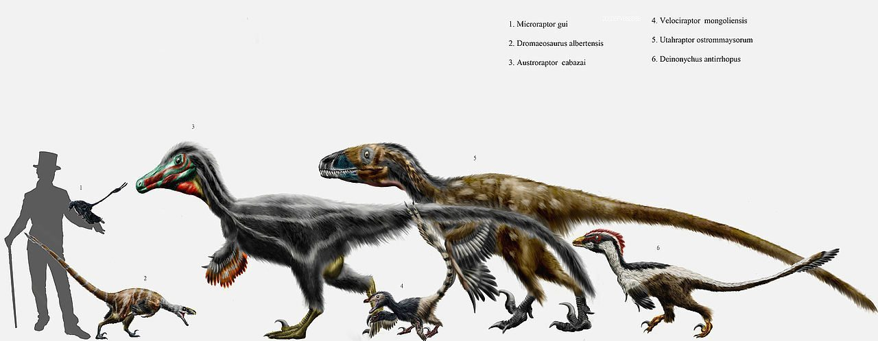 Image: Velociraptor dinosaurs to compare to cassowaries