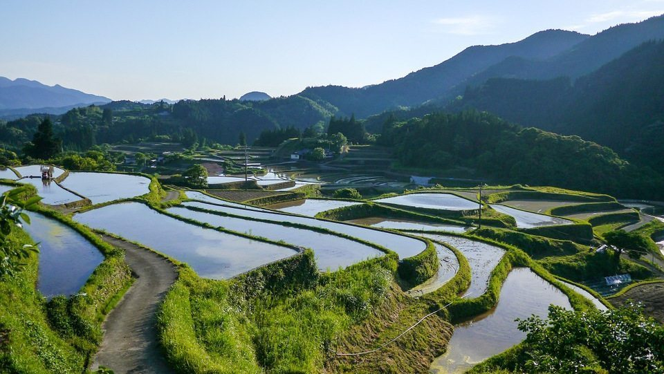 Image: Waving edges of Japanese rice paddy landscape