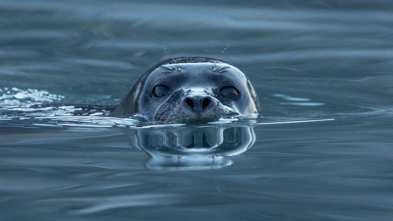 Image: Seal at water's edge