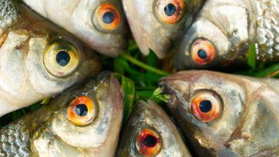 Fish on green grass