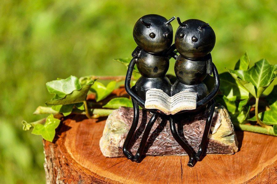 ants-1730011_1280