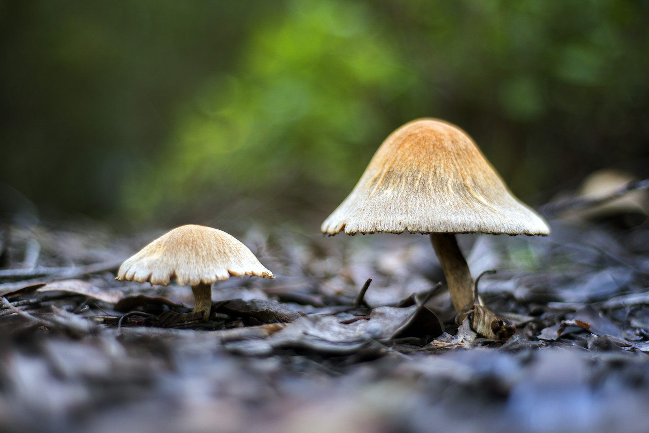 Image: Mushrooms on the forest floor