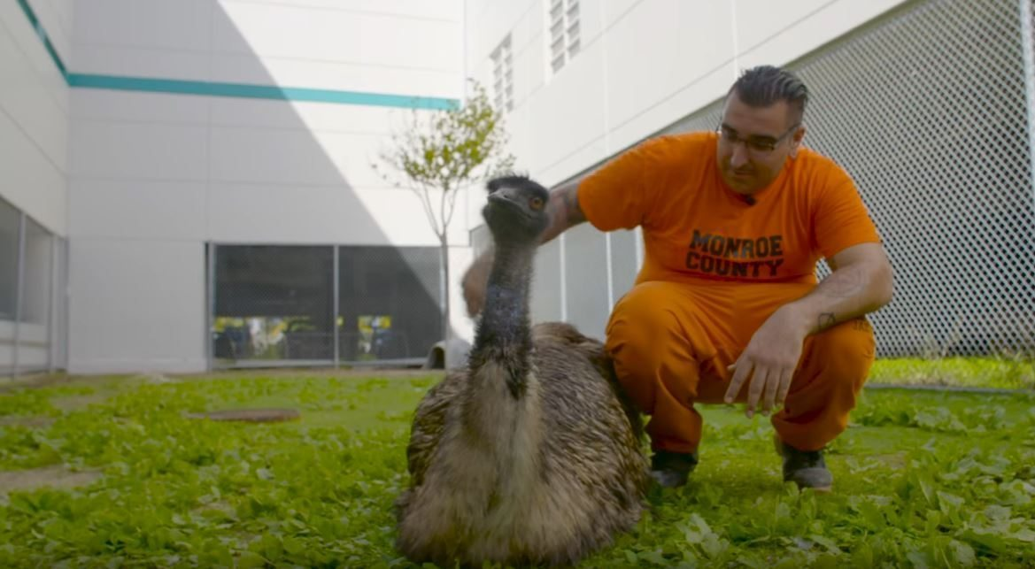 Image: Inmate at Monroe County Jail caring for an emu