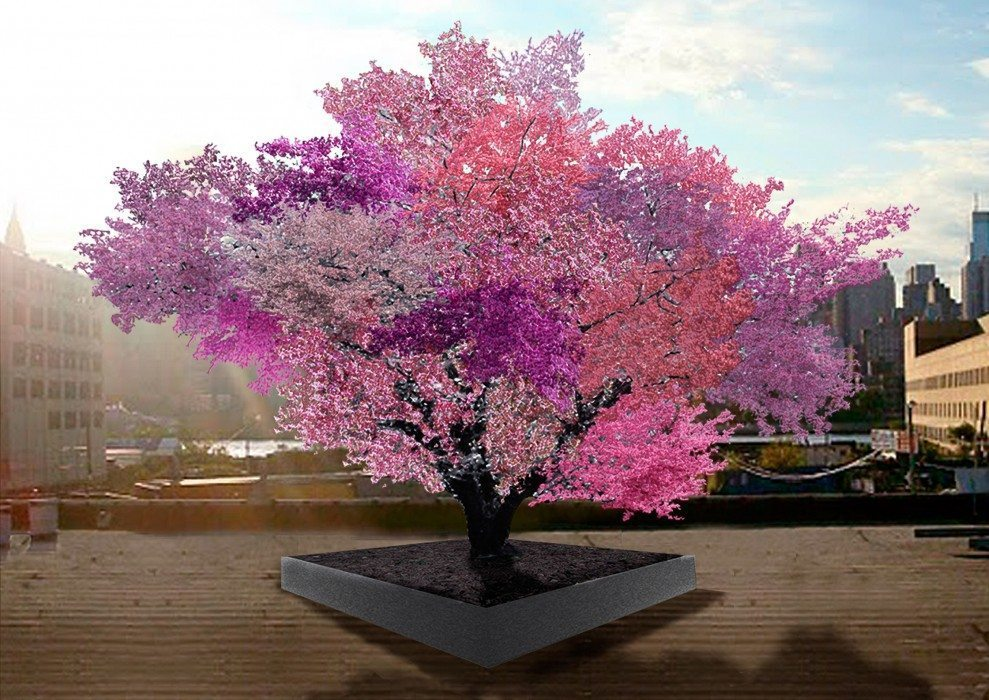 Image: The beautiful tree of 40 fruits