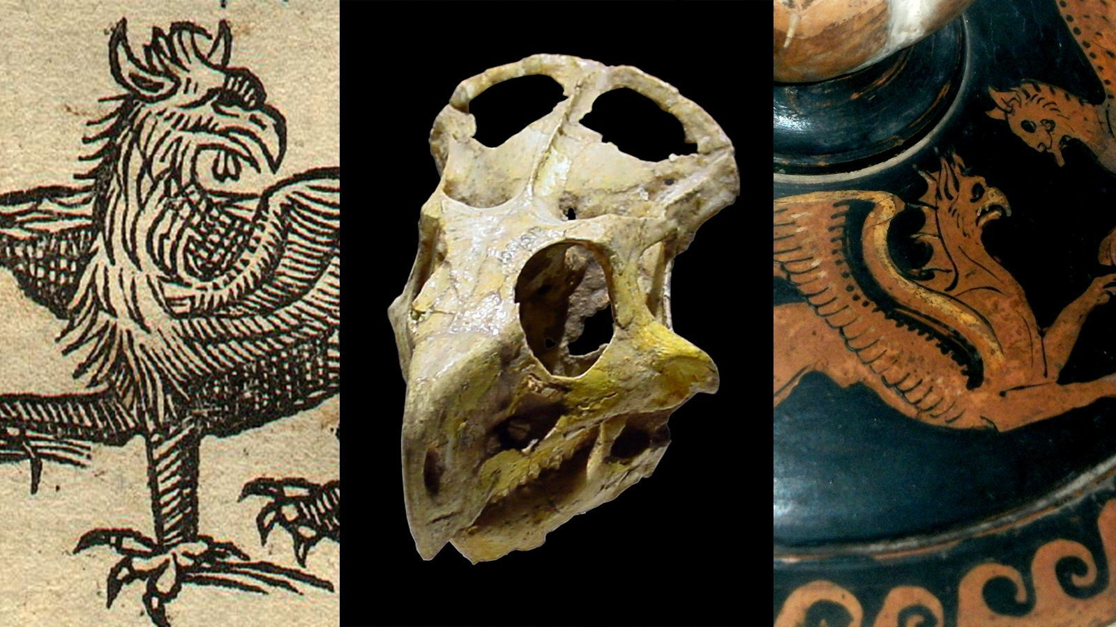 Image: Medieval Image of a Griffin, Protoceratops Skull, and ancient Greek Pottery of a Griffin