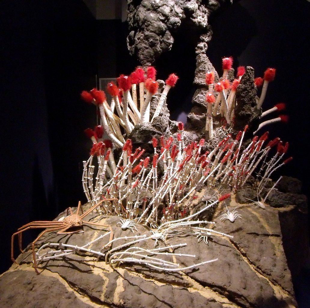 Image: Life around a deep sea volcanic vent