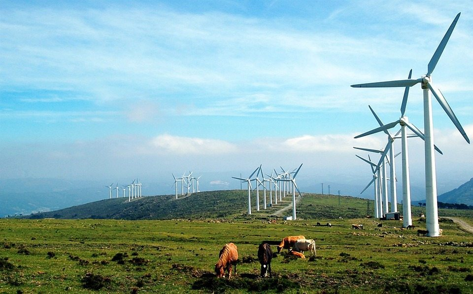Image: Field of cows and windmills