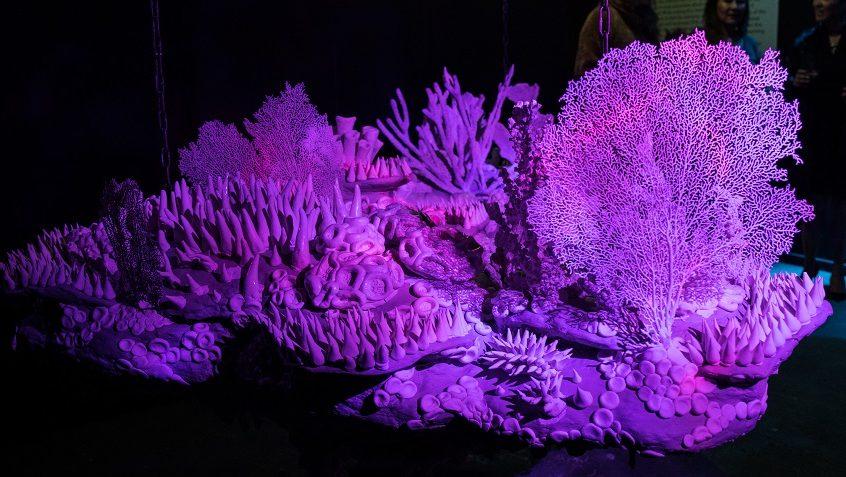"Image: Katrina Fuller's ""Body Reef"" on exhibit"